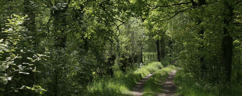 Permalink auf:Wald